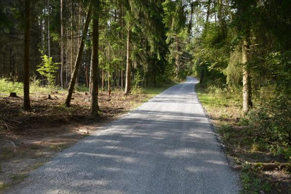 52f736fb6c74 Penetrovaná cesta v ihličnatom lese